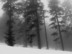 foggy view (Eggii) Tags: mountains mist fog trees top bw