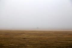 Foggy Day (milfodd) Tags: february 2019 fog foggy foggyfield