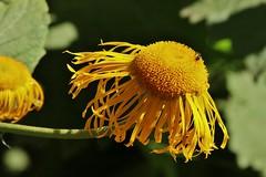 Flower (Hugo von Schreck) Tags: hugovonschreck flower blume blüte macro makro canoneos5dsr tamron28300mmf3563divcpzda010 greatphotographers