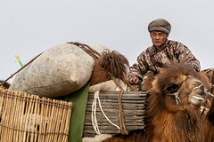 The Man Of The Caravan (Bulgam Sum, Mongolia. Gustavo Thomas © 2019) (Gustavo Thomas) Tags: camel bactrian camelriders caravan mongolia mongolian animals camelfestival bulgamsum asia travel voyager traveler trip voyage adventure portrait man retrato gobi