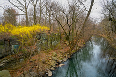 The Bronx River (JMS2) Tags: spring forsythia yellow river nybg thenewyorkbotanicalgarden nature water preserved park nyc bronx