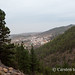 The pine forest and Vilaflor