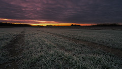 No. 1048 a Cold morning (H-L-Andersen) Tags: canoneos5dmk4 canon sindal denmark landoflight landscape nature farming rural lpm morning sunrise winter frost crofts sun hjørring manfrotto grass