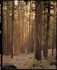 fall near lassen on medium format film (Garrett Meyers) Tags: pentax67 garrettmeyers film filmphotographer mountains trees forest california kodak kodakfilm portra400 snow fall cold blizzard storm lightrays sun 120 6x7