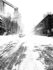 Point-Saint-Charles Whiteout (Montreal) (MassiveKontent) Tags: winter snow trees street contrast noiretblanc blackwhite blancoynegro montreal bw city monochrome urban blackandwhite streetphoto montréal quebec streetphotography bwphotography streetshot android absoluteblackandwhite frozen white whiteout blizzard road car sky building mono cold
