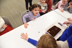 Beetles Rock, CC 2.9.19 (slcl events) Tags: beetlesrock butterflyhouse thebutterflyhouse beetles cliffcavebranch cliffcave slcl stlouiscountylibrary library libraryprogram children childrensprograms kids livebeetles