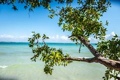 (JimmyJGreen) Tags: florida february summer sanibel island beach sand shore mangrove