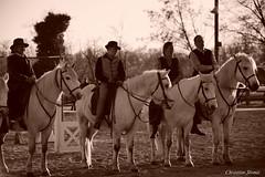 _DSC0706 (chris30300) Tags: camargue cheval