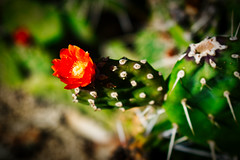 Flor & espinas (mgschiavon) Tags: flower green plants cactus california alive colors