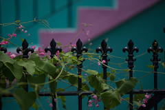 clôture vendredi (haint_blue) Tags: dof shadows light hff fencefriday railing steps stairs canon louisiana neworleans nola crescentcity bigeasy frenchquarter vieuxcarre iron vine flowers pink green leaves flower