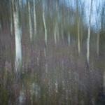 Woodland Walk with Monet by Steve Baldwin