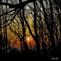 Coucher de soleil dans les arbres (DOMVILL) Tags: belgique montkemmel arbre coucherdesoleil domvill soleil wwwflickrcompeoplevildom