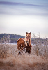 Wild Horse of Assateague... (DTT67) Tags: wildhorse wild canon saltmarshes mammal animal assateague maryland nature wildlife