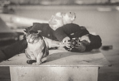 a model and a photographer (tomomichi_ito) Tags: cat animal monochrome japanesepaper