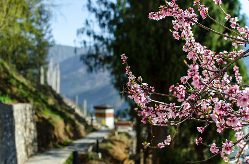 Spring blossoms in Bhutan