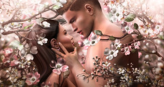 ^^Swallow^^ Ears Contest 2019 - meriluu17 2 (meriluu17) Tags: swallow blossom blossoms love couple kiss pair them people sakura flower pink pastel light fantasz surreal portrait kisses magic moment thoughs imagines feeling mood