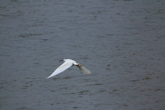 IMG_5192 (monika.carrie) Tags: monikacarrie ythan wildlife scotland