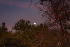 Marvelous Moonrise (Naturali Images) Tags: moon moonrise sky nature trees evening