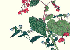 Hardy begonia and Asiatic dayflower (Japanese Flower and Bird Art) Tags: flower hardy begonia grandis begoniaceae asiatic dayflower commelina communis commelinaceae ukiyo woodblock picture book japan japanese art readercollection