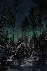 Night of full moon (grus_p) Tags: auroraborealis glow green nightscape northernlights night nature sky snow stars trees tranquillity winter february finland forest luminanceboréale landscape