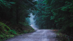 The Scenic Route (PNW-Photography) Tags: giffordpinchot nationalforest giffordpinchotnationalforest woods forest packwood randle morton mountains mountain trees landscape moody rain rainy smctakumar50mmf14 takumar washington