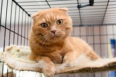 Cat (petr.petrov) Tags: cat pet kitty domestic animal shelter homeless sad russia eyes cute kitten cats beauty