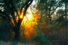 Light in the Forest (Heather's Reflections Photography) Tags: forest light sun sunset canopy leaves trees nature dark dusk evening sunny rural woods outdoor country countryside