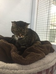 Callaghan - 13 year old neutered male