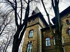 Tallinn (unciclamino) Tags: eesti old tree estonia city tallinn