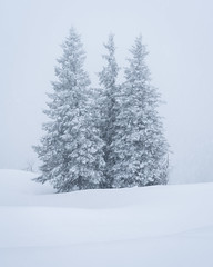Triplets (Greg Whitton Photography) Tags: austria landscape landscapephotography mountains skiing sony thealps winter a7riii pine trees alpine blizzard snowing