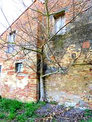 IMG_0026x (gzammarchi) Tags: italia paesaggio natura pianura campagna ravenna villanovadiravenna casa pietra albero fico