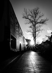 QBuzz Glowing in the Curve #ThatInnerCityGlow (17-03-2019) by DillenvanderMolen #MrOfColorsPhotography #PortfolioOfColors MrOfColors.com (mrofcolorsphotography) Tags: canonnederland canonphotography canon canoneosr bnw white grey photooftheday photographer photography photo tree trees streetphotography street streetphotographer blackandwhite black blackandwhitephotography blackandwhitephoto photos glow thatinnercityglow sunlight sun sunny sunshine sunset sundown wolk clouds cloud cloudy cloudporn cruve bus transportation city cityphotography cityphotographer contrast contrasty light dillenvandermolen dillen mrofcolorsphotography mrofcolors mrofcolorscom journeyofcolors journey photographers fotografie foto fotosipkes flickr 500px 500pxstudio sunflare lights day daytime daylight
