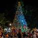2018 - Mexico - Oaxaca - Zocalo Tree