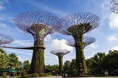 Gardens by the Bay (Synghan) Tags: garden gardens supertreegrove gardensbythebay singapore supertree southeastasia lowangle photography horizontal outdoor colourimage fragility freshness nopeople foregroundfocus adjustment interesting awe wonder fulllength depthoffield vivid sharpness tall big bigtree marinabay nature natural grove plants tree trees greens green travel destination attraction landmark local regional tourism journey vacation canon eos80d 80d sigma 1750mm f28 os dc ex 싱가포르 여행 슈퍼트리 가든스바이더베이 가든스바이더배이 동남아