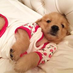 Dog (dogpicsinfo) Tags: dog dogs puppy puppies cutestdog cute cutepuppy sweet animal