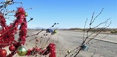 El Paso to Columbus-Highway 9 red sparklies 8 and prius (Mzuriana) Tags: elpaso texas newmexico columbus highway9 decoratedtree redsparklies red