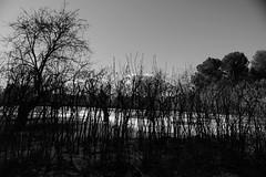 Winter dreams (Lea Ruiz Donoso) Tags: paisaje blanco y negro monocromo black white minimalista minimalismo
