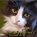 cat care meme