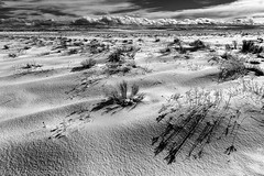 Snow Drifts and Shadows, Wasco County, OR (4 Corners Photo) Tags: 4cornersphoto blackandwhite clouds cold drift landscape monochrome mountains nature northamerica oregon outdoor prairie rabbitbrush rural scenery shadow snow snowdrift unitedstates wascocounty weather wind winter