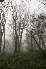 Foggy Woodland (Keith (foggybummer)) Tags: aberdeenshire benholm woodlandwalk foggy path trees winter
