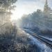 TheHunter: Call of the Wild / Catching The Early Train