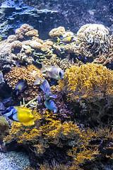 Peces de ciudad 3 (lebeauserge.es) Tags: madrid españa naturaleza zoo animal acuario agua pez