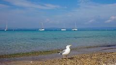Golden Island... (〃‿〃✿) (Mona Zimba) Tags: frenchriviera provence france beach seascape seagull turquooise blue sea island