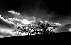 072 Isolated Tree (georgestanden) Tags: blackandwhite black white monochrome desaturated photo photography photograph bnw art picture photooftheday blackandwhitephotography bw monoart blackwhite isolated tree branch trunkderbyshire clouds abstract landscape silhouette sky moody