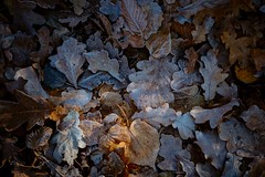 Soft Freeze (Tom Levold (www.levold.de/photosphere)) Tags: autumn fujixt2 herbst xf18135mm leaves blätter laub foliage forest xt2 wald wood fuji afsnikkor70300mmed