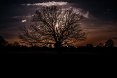 Winter sun...... (Dafydd Penguin) Tags: winter sun muted sunset tree silhouette colour clouds sky black stoke lodge bishop bristol england leica m10 summicron 35mm f2