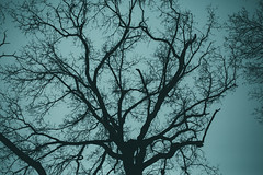 KRIS7616 (Chris.Heart) Tags: túra tél természet winter hiking forest pilis