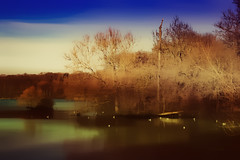 The lake and trees ... (Julie Greg) Tags: texture tree trees lake water nature bird birds park colours canon