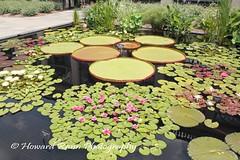 Longwood Gardens Summer 2017 (246) (Framemaker 2014) Tags: longwood gardens kennett square pennsylvania united states america