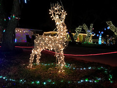 Christmas Lights Reindeer 4 (Lux Llama Productions) Tags: christmas lights holiday holidays winter december jan january dec decor decorations decoration prop jesus usa us unitedstates florida bocaraton house suburb hot light led cool awesome santa sleigh reindeer deer trees tree orb